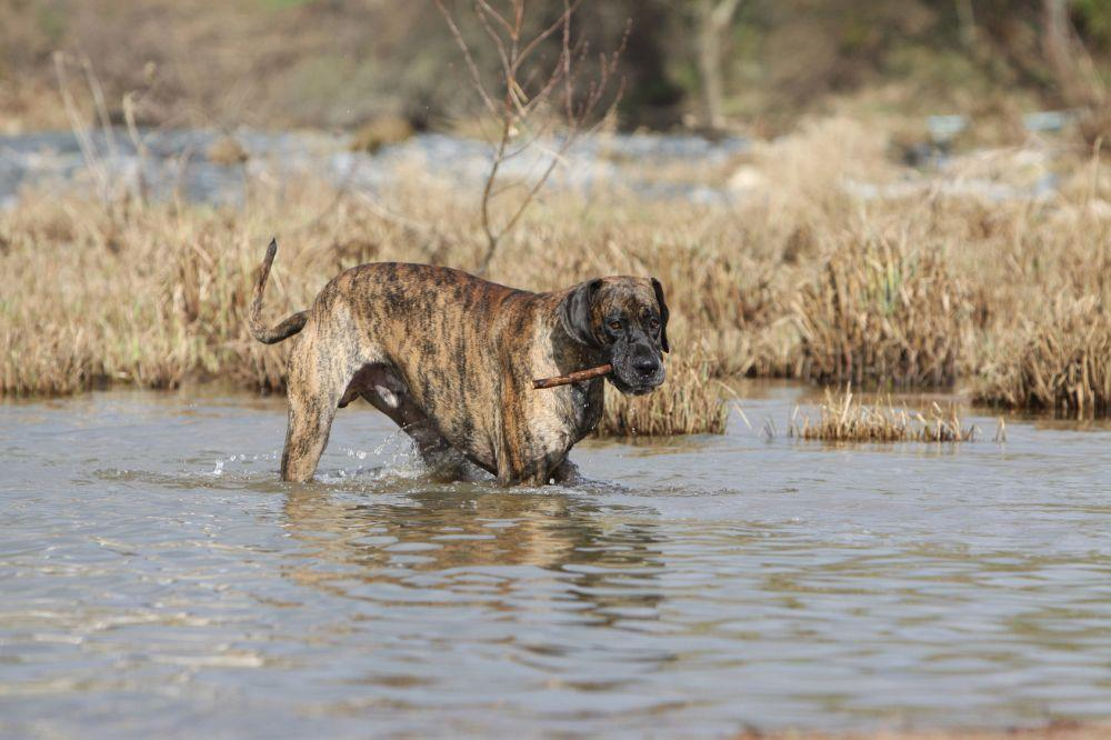 Dogge baden
