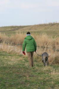 Doggen Bewegung Spaziergänge