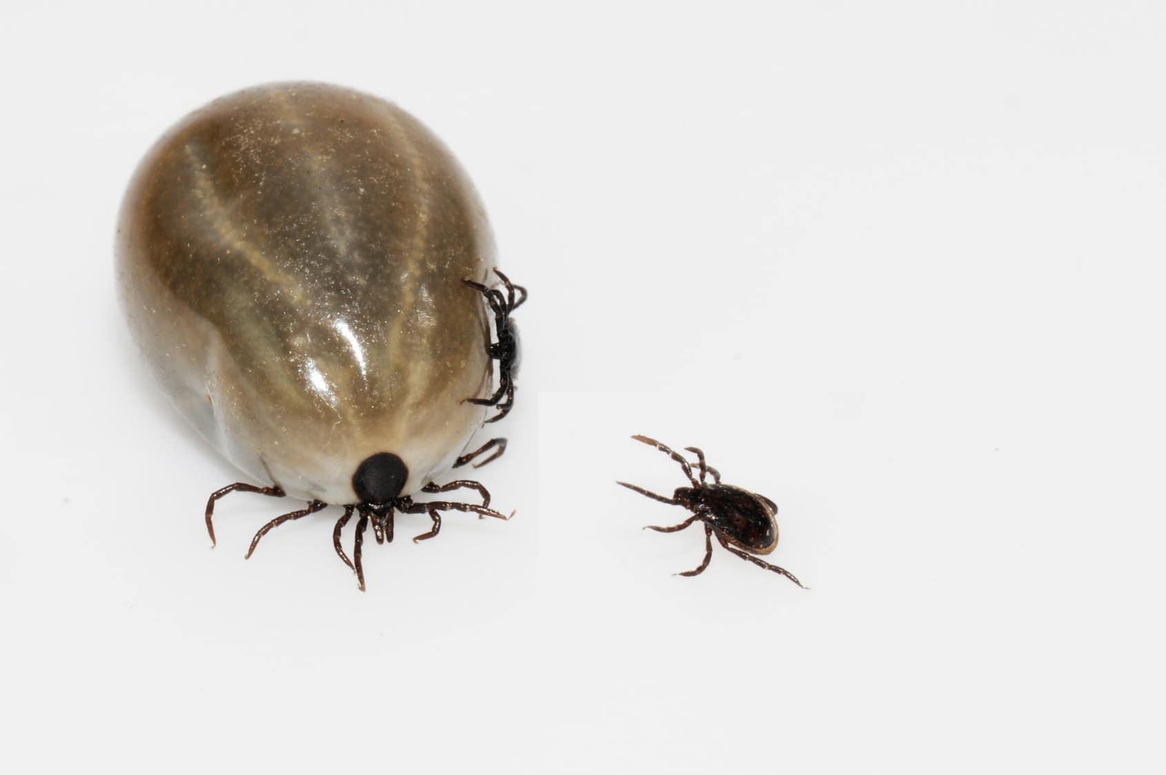 Einen Skorpion in Kärnten gesehen oder gefangen zu haben, können ...
