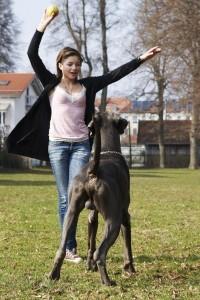 aus Dogge Welpen werden große Hunde