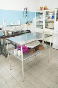 Für den Tierarzt können dem Dogge Besitzter zum Teil hohe Kosten entstehen.