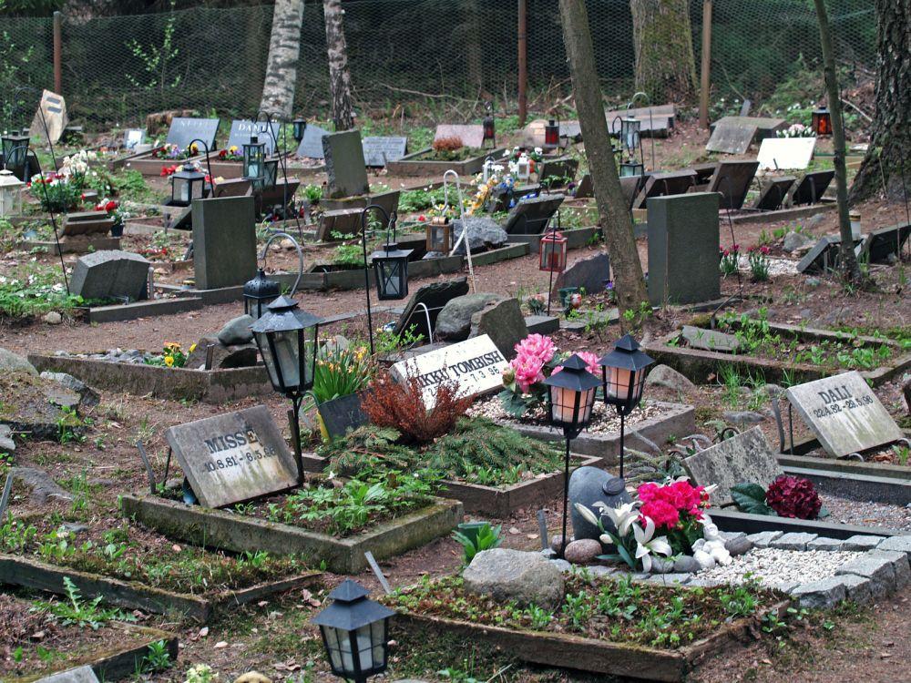 Die Dogge auf dem Tierfriedhof begraben.