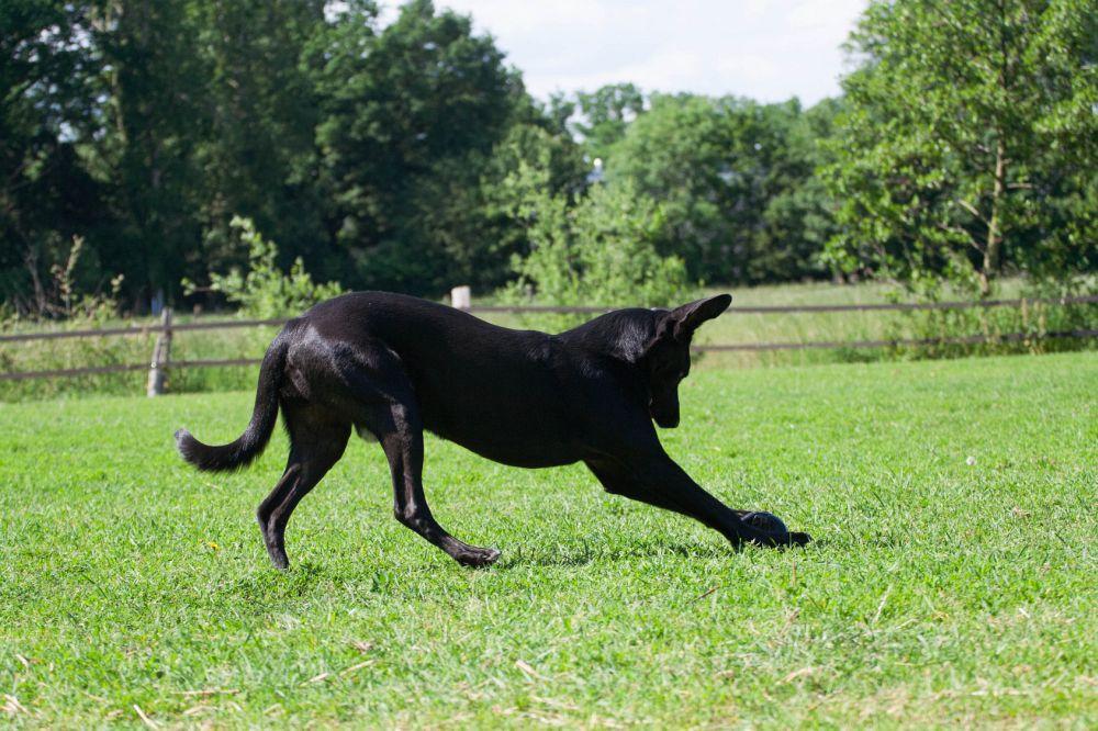 Schon auf dem täglichen Spaziergang können Sie Ihre Dogge unterhaltsam beschäftigen.