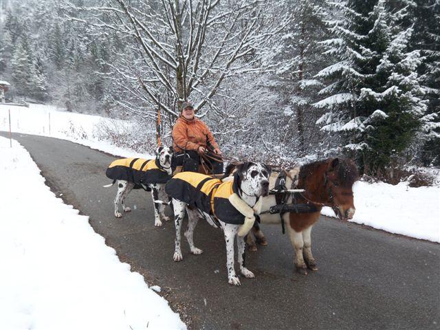 Dogge im Winter beschäftgen