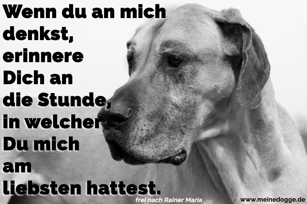 Eine traurig Dogge