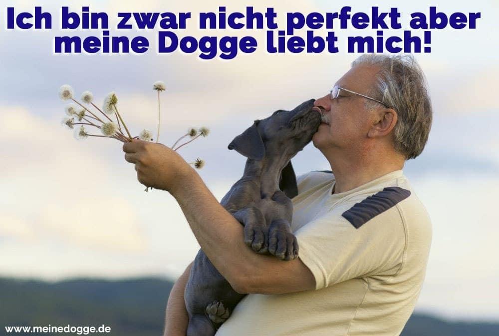 Eine Dogge küsst seinen Besitzer
