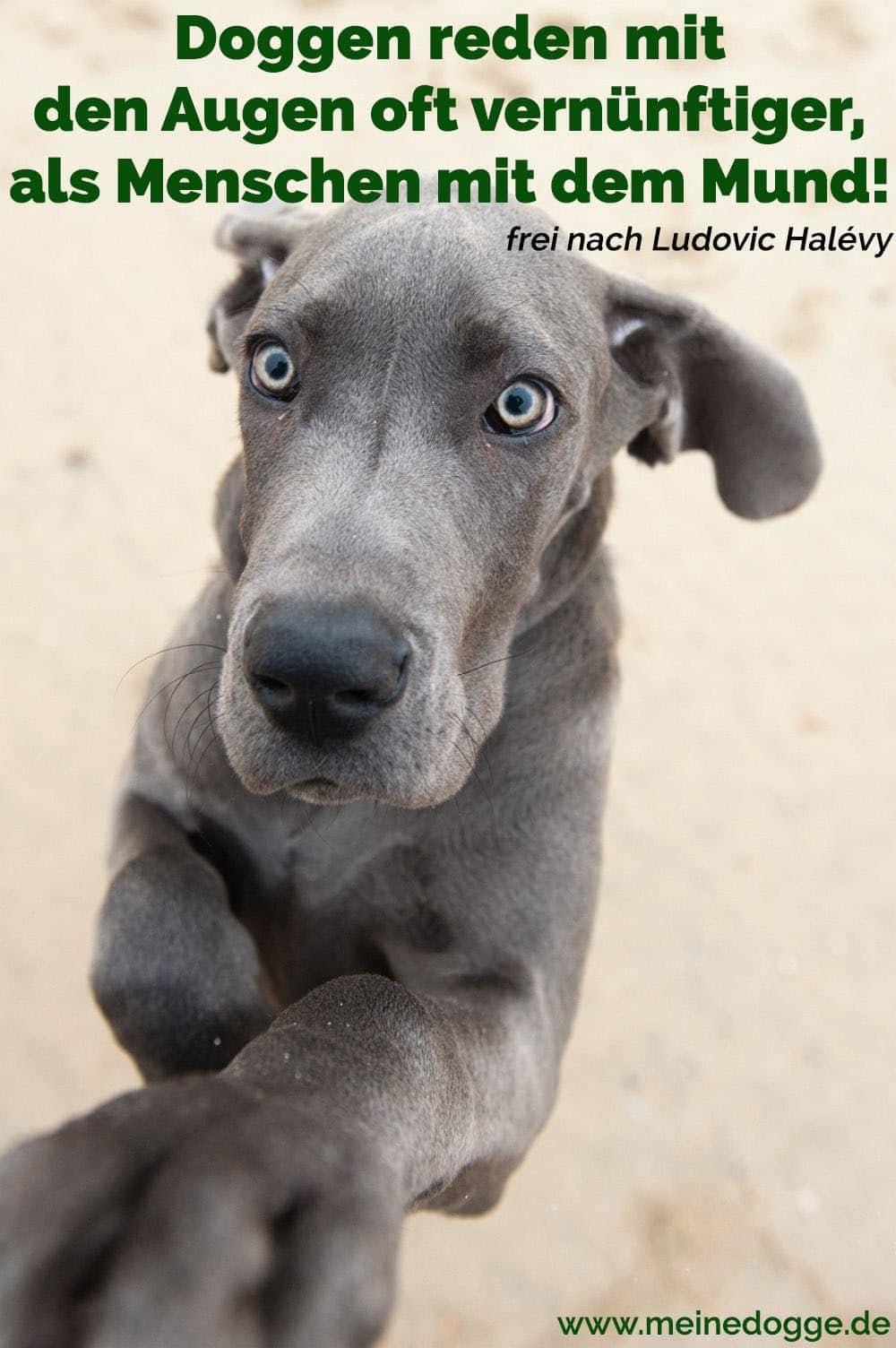 Eine Schöne Dogge