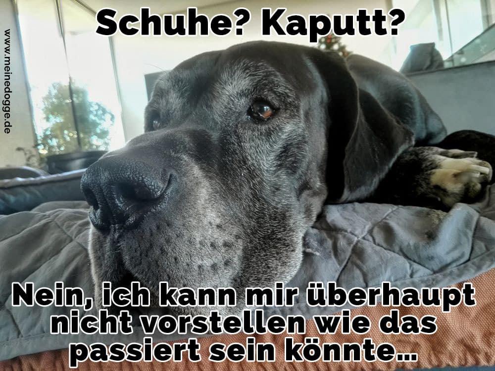Traurige Dogge