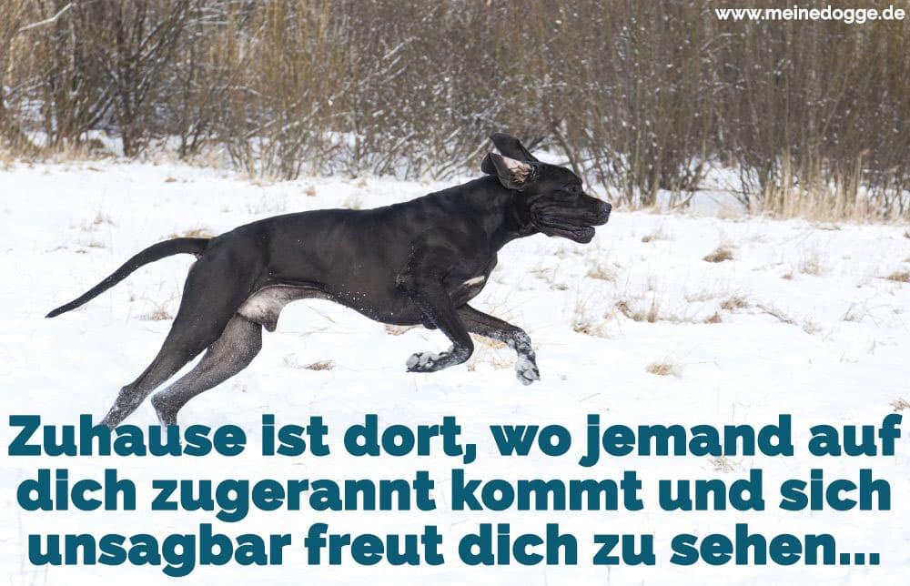 Dogge rennt im Schnee