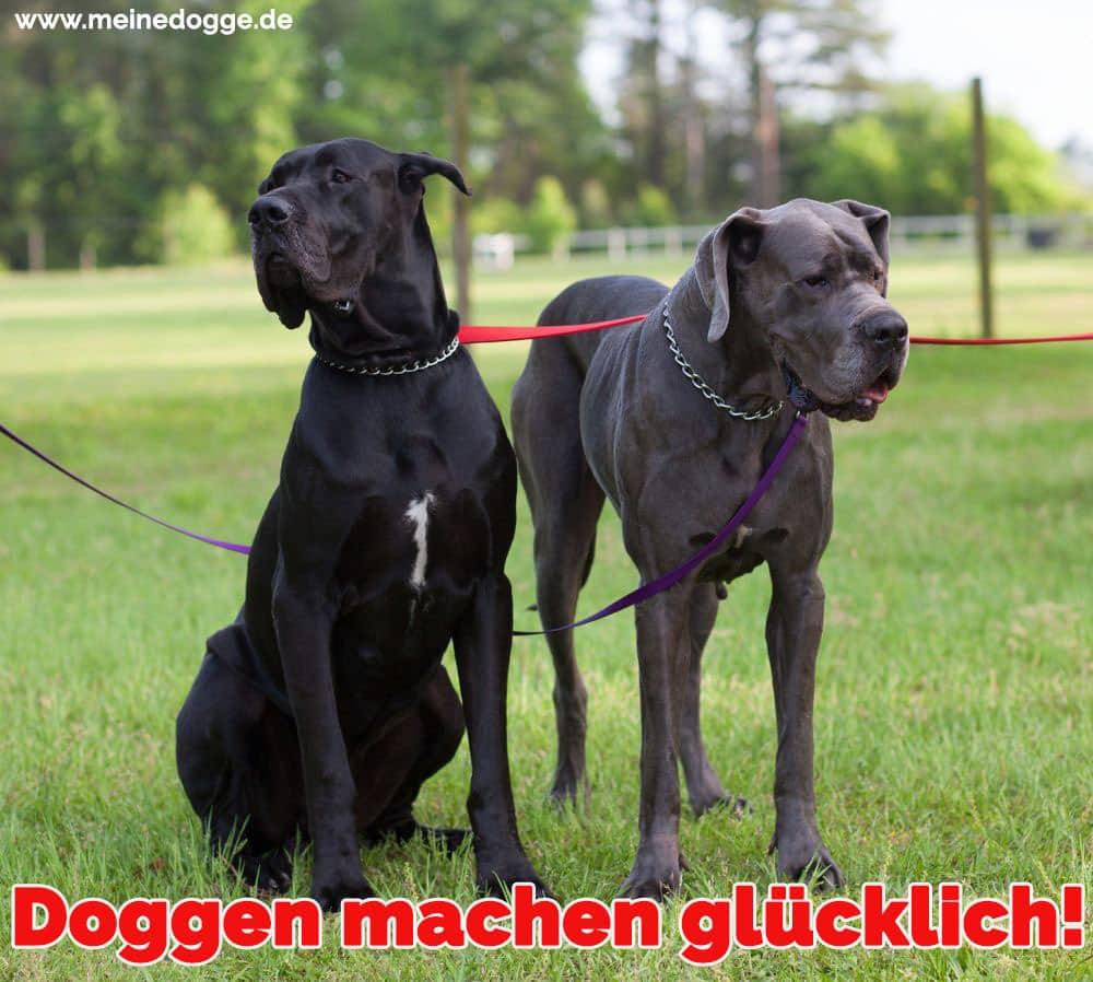 Zwei Doggen im Park