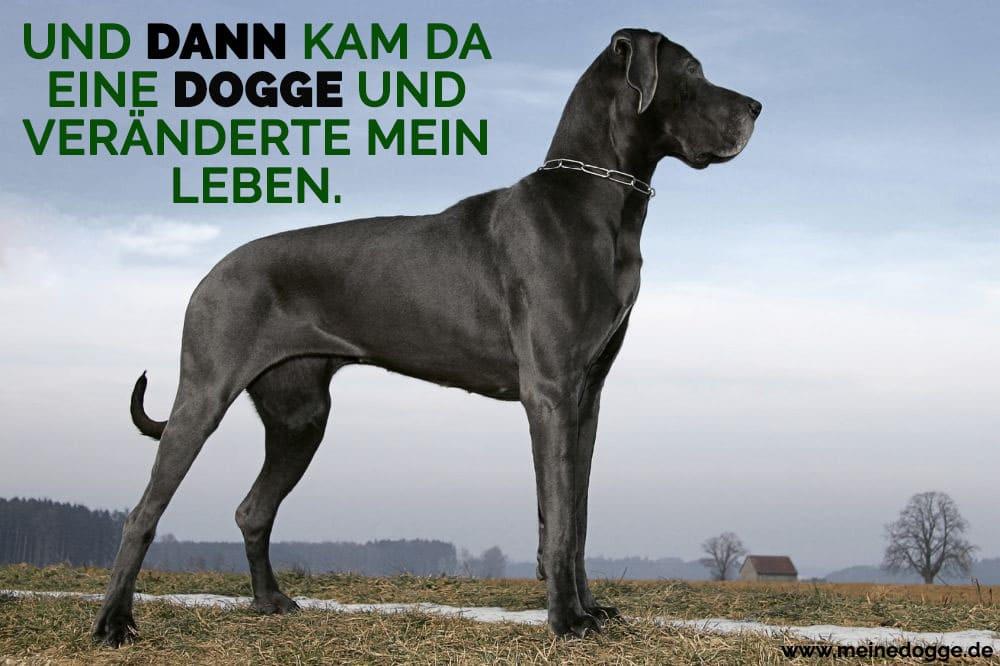 Eine Dogge auf dem Gebiet