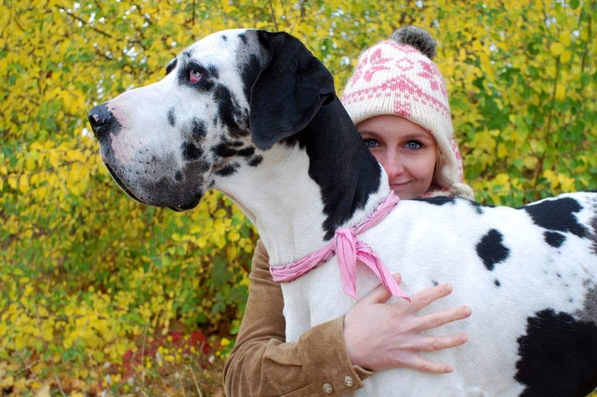 Dogge wird von Frau umarmt