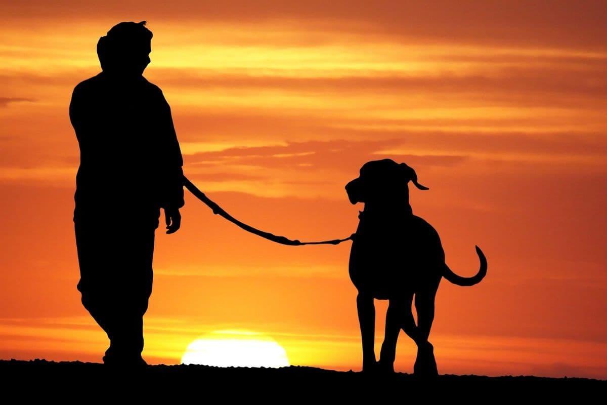 Mit Dogge im Sonnenuntergang spazieren