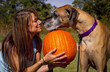 woman and dog sharing tender moment over a pumpkin, nose to nose